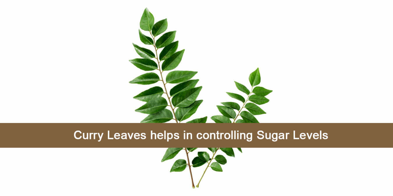 Curry Leaves helps in controlling Sugar Levels
